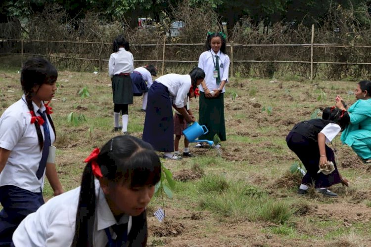 Mass tree plantation in Manipur on the occasion of the World Environment Day.